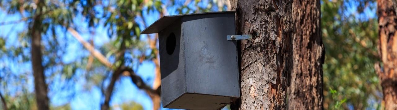 Nest box in a tree.