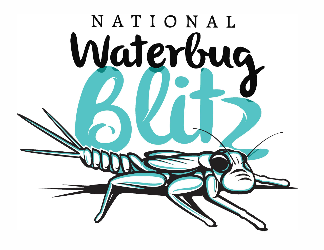 National waterbug blitz logo, words and drawing of a waterbug.
